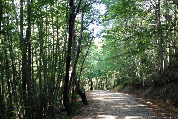 Orman içi 1