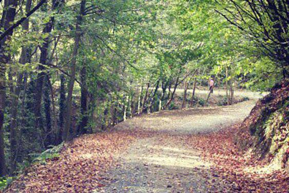 Orman içi 2